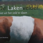 Belted Welsh Cattle appear in Dutch Book